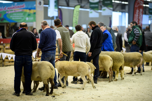 Salon de l'Agriculture - Journée Ovine